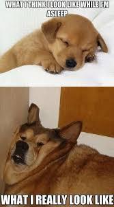 Reality Sleeping Dog Meme | Slapcaption.com | funny bunny ... via Relatably.com