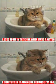 Fluffy Cat Memes. Best Collection of Funny Fluffy Cat Pictures via Relatably.com