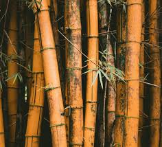 Truth or Trend: Is <b>Bamboo</b> Sustainable?