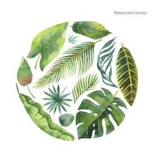 <b>Tropical Watercolor</b> Vector Images (over 13,000)