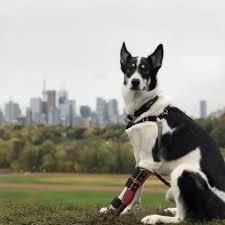 <b>Dogs</b> - Toronto Humane Society