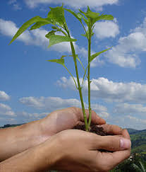world environment day   wikipedia official name un world environment day
