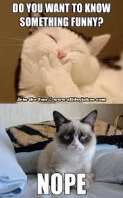 Crabby Cat on Pinterest | Grumpy Cat, Grumpy Cat Meme and Cat via Relatably.com