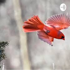 The Wandering Cardinal Podcast