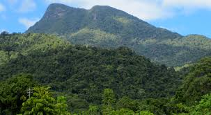 Image result for images of the daintree rainforest