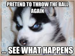 Insane Husky memes | quickmeme via Relatably.com
