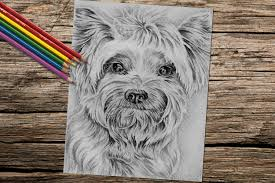 manufacturing small canvas clean living pet yorkie dog coloring book page adult coloring book coloring page adult