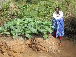 Image result for keyhole garden africa