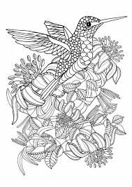 Small Picture HummingbirdPrintableColoringPagesDigitalbyTangledPeacock