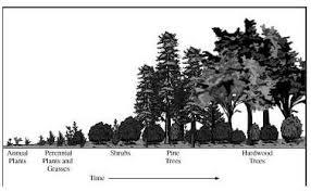 Ap biology  Biology and Models on Pinterest Essay