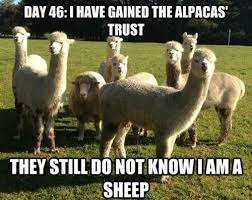 still-dont-know-i-am-a-sheep-meme1.jpg via Relatably.com