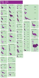 best images about zoology career options zoology birds