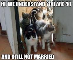 Memes Vault Depressed Cat Memes via Relatably.com
