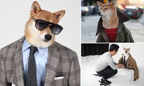 The <b>Shiba Inu</b> who probably earns more than you...How Menswear ...