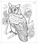 Раскраска про сову