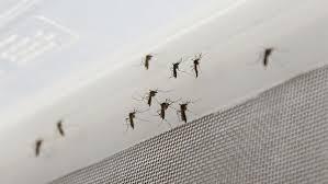 Resultado de imagen para zika transmisión sexual