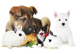 """Résultat de recherche d'images pour """"photo d'animaux"""""""