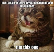25 Funny Cat Memes That Will Make You LOL via Relatably.com