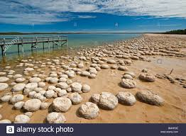 cliftons living rocks thrombolites high living  thrombolites a variey of microbialite or living rock lake clif