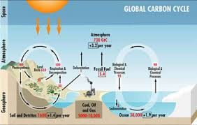college essays  college application essays   carbon cycle essayexample essays  carbon