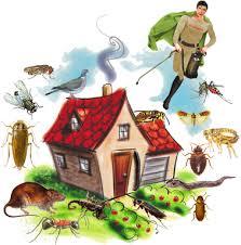 شركة مكافحة حشرات بالهفوف