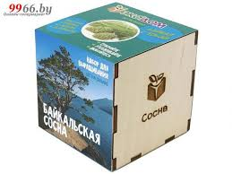 <b>Растение ЭкоДом Сосна</b> Байкальская 1061843804629 купить в ...