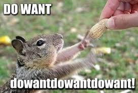 funny-squirrel-reaching-nut-excited-do-want-pics.jpg via Relatably.com