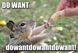funny-squirrel-reaching-nut-excited-do-want-pics.jpg via Relatably.com