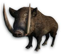 Image result for boar images