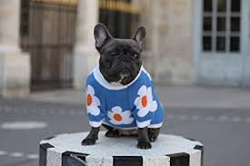 xiyolab Designer Original <b>Fashion</b> Dog Clothes French Bulldog <b>Cold</b> ...