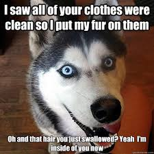Overly Attached Dog memes | quickmeme via Relatably.com