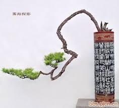 Một số tác phẩm <b>Bonsai</b> Hàn Quốc | <b>Бонсай</b> растения, <b>Бонсай</b> и ...