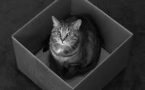 Image result for gray kitten in a box