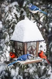 ᐈ Птицы под снегом фотографии, фото птицы зимой | скачать на ...