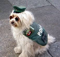 Perros policías