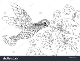 Small Picture Hummingbird Coloring Book Coloring Coloring Pages
