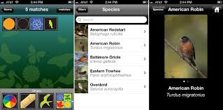 florida < magnificent frigatebird blog click to embiggen
