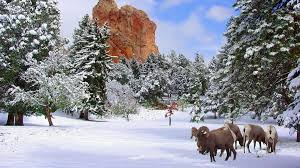 Christmas & Holiday Events 2019 - Visit Colorado Springs