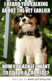 Funny Pet Pictures With Quotes - funny pet pictures with quotes ... via Relatably.com