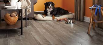 Laminate Flooring Kitchener Flooring And Carpet Kitchener Waterloo Marcella Carpets