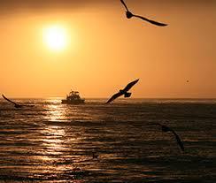 essays in wildlife conservation   marinebioorg sunrise off san diego ca marinebio is proud to present essays on wildlife