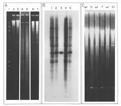 Impaired <b>drug</b> uptake in methotrexate resistant Crithidia fasciculata ...