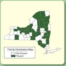Scheuchzeriaceae - Family Page - NYFA: New York Flora Atlas ...