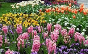 Садовые <b>удобрения</b> для цветов: азотные, калийные ...