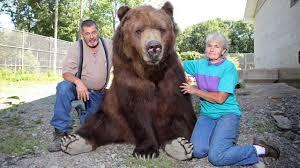 Our Big <b>Bear Family</b> - YouTube