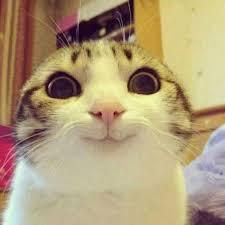 Smiling Cat Meme Generator - Imgflip via Relatably.com