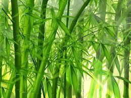 Resultado de imagen de bambu japones