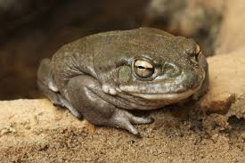 Treating depression with a psychedelic found in <b>toad venom</b> | Hub