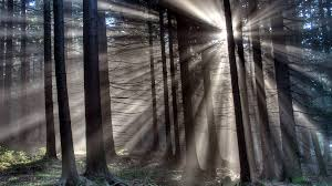 Image result for gloomy pictures of forest