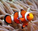 Images & Illustrations of bony fish